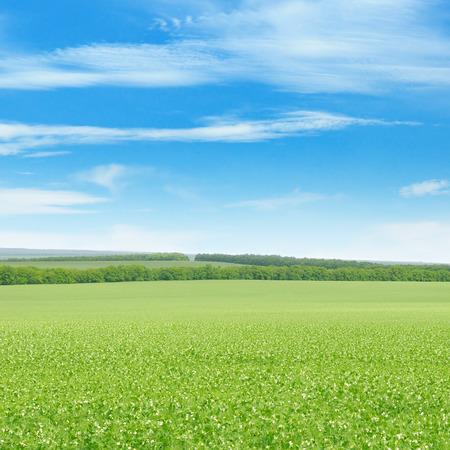 緑の野原と光雲と青空