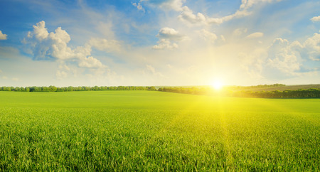 meadow grass: field, sunrise and blue sky Stock Photo