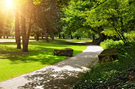 美しい緑の芝生の夏の公園