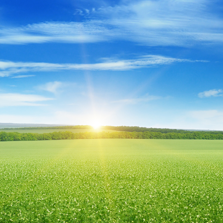 sunny sky: field, sunrise and blue sky Stock Photo