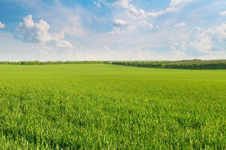 緑の草原、青い空光雲