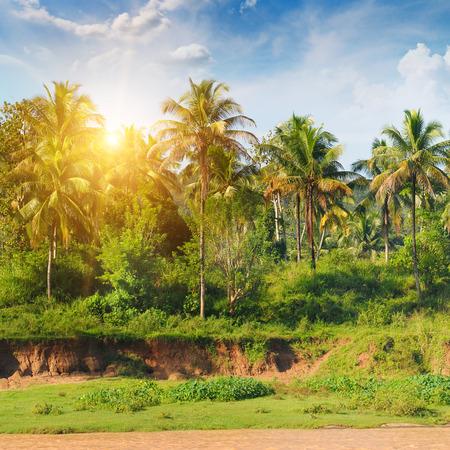 arboleda: palmeral y la salida del sol Foto de archivo