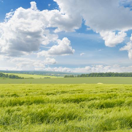 tarwe veld en bewolkte hemel