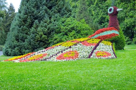 pavo real: cama de flores en forma de figuras de pavo real