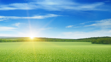 Campo, l'alba e il cielo blu Archivio Fotografico - 39003304