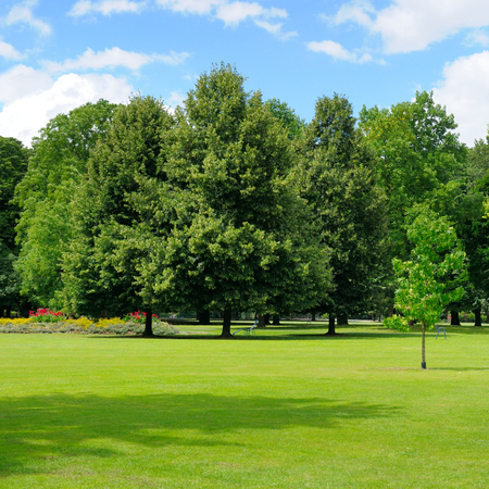 park, green meadow and blue sky Banque d'images
