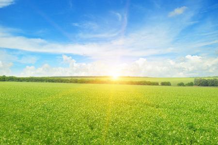 tree in field: field, sunrise and blue sky Stock Photo