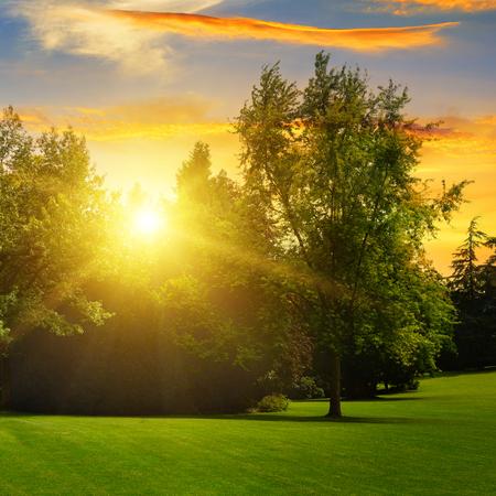 beautiful summer park and sunset photo