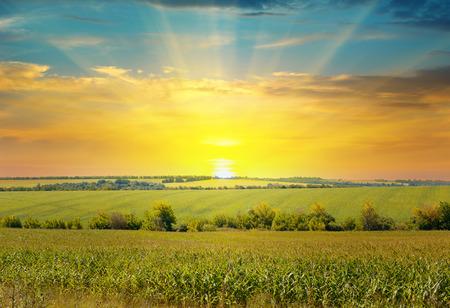 sol radiante: salida del sol sobre el campo de ma�z Foto de archivo