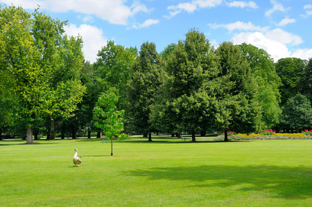 park, green meadow and blue sky 版權商用圖片