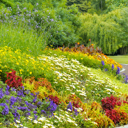 beautiful background of bright garden flowers Imagens