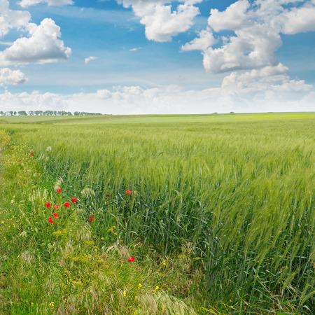 緑の草原、青い空の雲