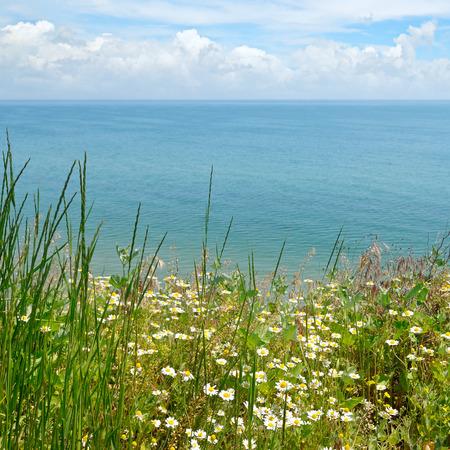 camomile: camomile on the sea shore Stock Photo