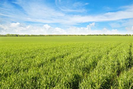 llanura: campo verde y el cielo azul con nubes de luz