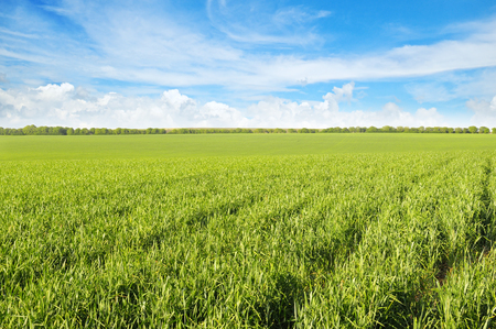 green field and blue sky with light clouds Stock Photo - 43263358