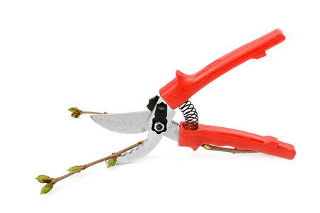 secateur: garden scissors isolated on a white background Stock Photo