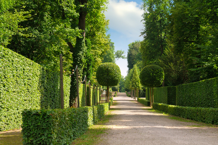 hedgerow: summer park with a beautiful avenue and footpaths Stock Photo