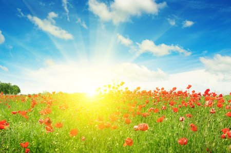 sunlight sky: field with poppies and sun on blue sky