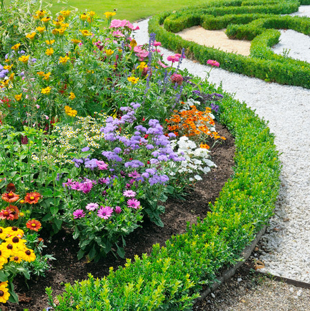 ornamental garden: beautiful background of bright garden flowers Stock Photo