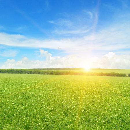 farm field: field, sunrise and blue sky Stock Photo