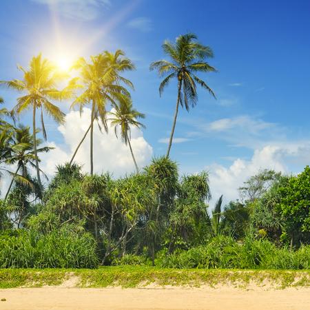 sunset tree: tropical palms on the sandy beach
