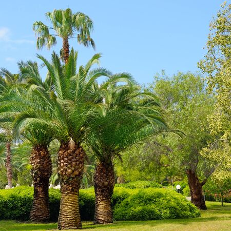 tropical garden: tropical garden with palm trees and lawn Stock Photo