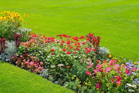 temporada: hermoso fondo de flores de jardín brillantes
