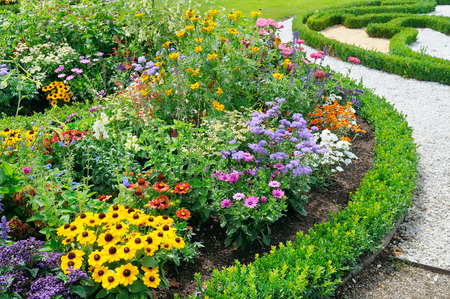 beautiful background of bright garden flowers Standard-Bild