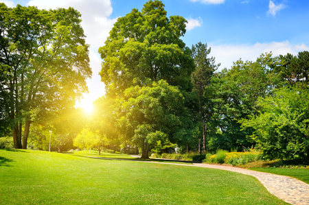 summer park with beautiful green lawns Stock Photo - 47692740