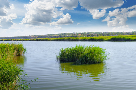 cane creek: thickets of reeds on the lake