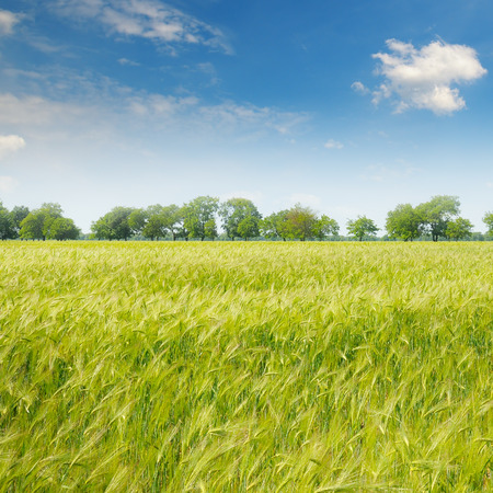 nature image: green field and blue sky with light clouds