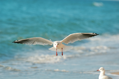 an feather: seagull flying over the sea