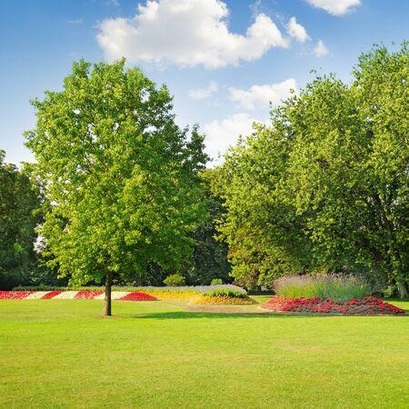 parque de verano con una hermosa cama de flores