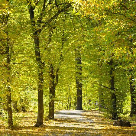sylvan: beautiful autumn park with soft sunlight