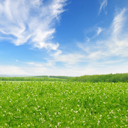 blue sky and fields: green field and blue sky with light clouds