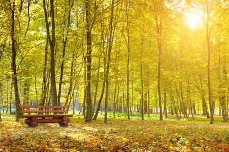 mooie herfst park en zonsopgang