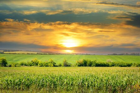 corn field and sunrise on blue sky