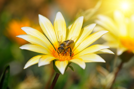 summer flowers: bee on a beautiful flower in the sun Stock Photo