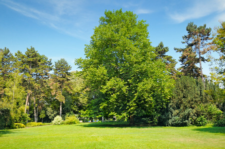 beautiful tree: park, green meadow and blue sky Stock Photo