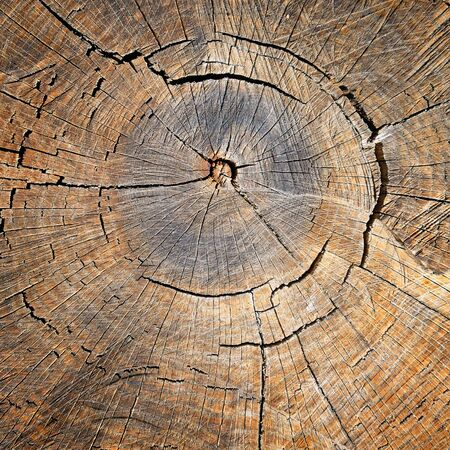 annual ring annual ring: texture of the oak stump, background top view
