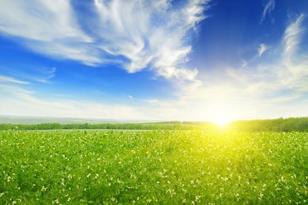 들판, 일출과 푸른 하늘