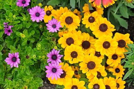 beautiful background of bright garden flowers Banque d'images