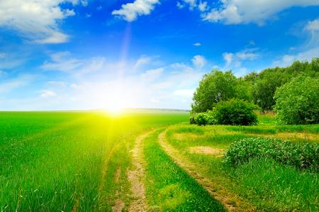 scrub grass: green field and sun on blue sky
