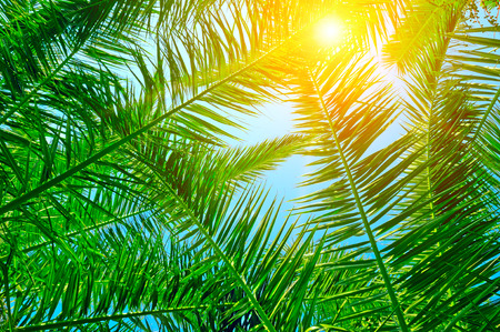 blue summer sky: background of palm leaves and blue sky Stock Photo