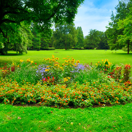 garden scenery: summer park with beautiful flowerbeds