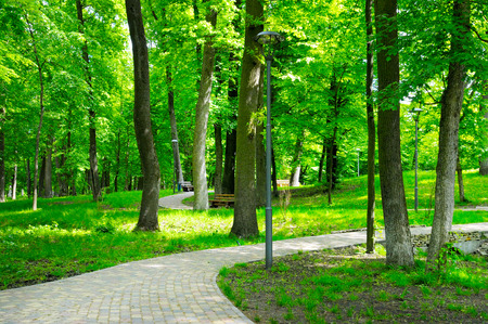 walking paths: summer park with walking paths