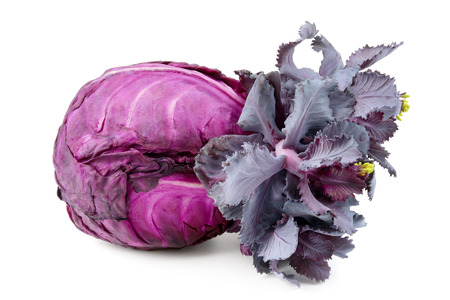 head of cabbage isolated on a white background