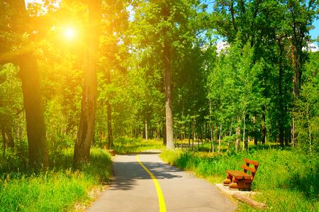 walking paths: summer park with beautiful walking paths