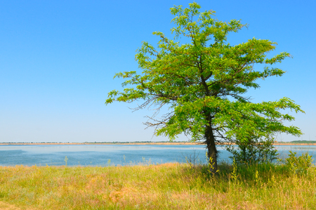 inlet bay: lonely tree on the shore of the Gulf Stock Photo