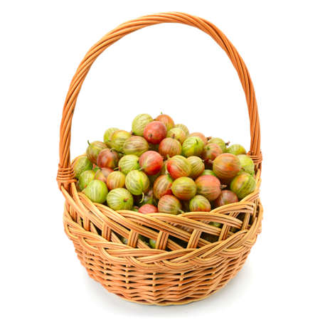 roundish: berry of gooseberry in a basket isolated on white background
